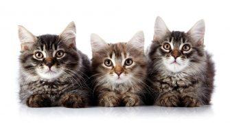 Espaço dos bichos – Á página dos Felinos – CLIQUE AQUI