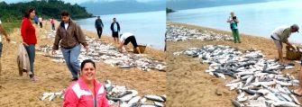 FARTURA DE PEIXES NO LITORAL DE SC – A multiplicação dos peixes na areia da praia