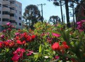 1-Flores2