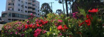 ONDE O INVERNO PARECE UMA PRIMAVERA – Lages encanta com os tons coloridos das flores