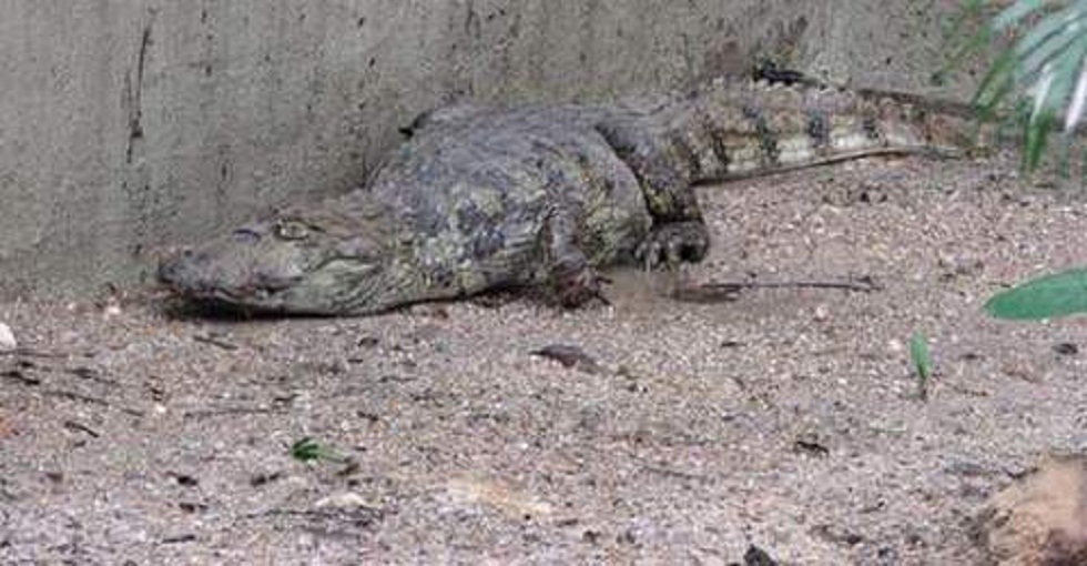 ANIMAIS SILVESTRES INVADEM CIDADES – Conheça, também, a maior cobra do mundo