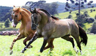 """PARA PENSAR: """"O Brasil é uma taça com 2/3 cheios. Mas só falamos daquele 1/3 vazio. Isso é o mesmo que a gente falar mal do nosso cavalo à venda."""