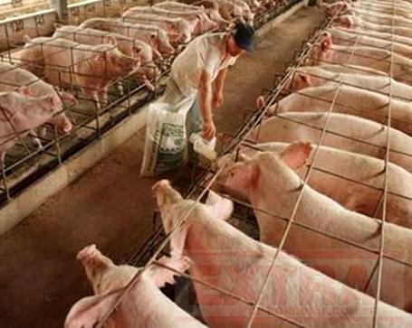 AGRONEGÓCIO BRASILEIRO É ESTRATÉGICO – Demais países nunca deixarão de comprar comida.