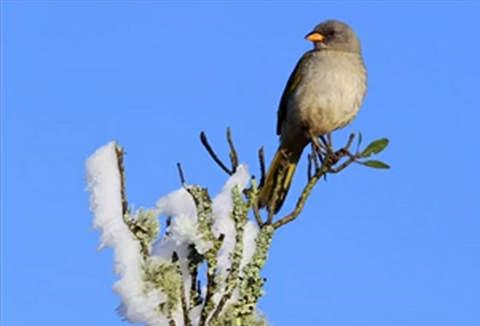 Pássaro serra (1)