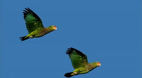 Pássaro serra (3)