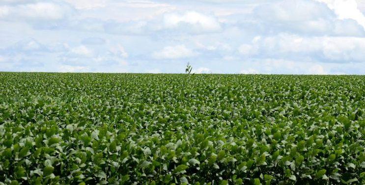 PRODUÇÃO DE GRÃOS É RECORDE PELO 4º ANO SEGUIDO – Ótimo para recuperação da economia; agronegócio como um todo vem impactando, positivamente, na geração de riquezas